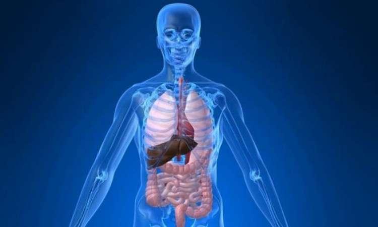 Waspadai Masalah Penumpukan Racun Dalam Tubuh yang Bisa Mengganggu Kesehatan